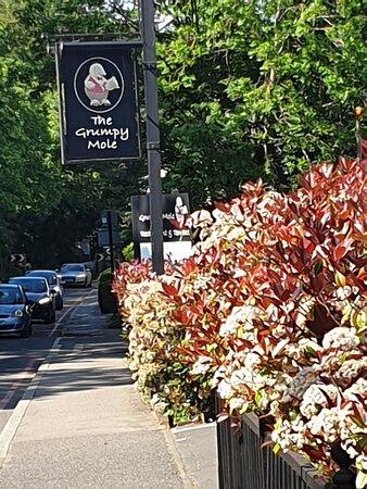 Cheam, UK: Grumpy mole