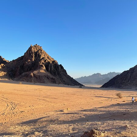 Sinai Safari