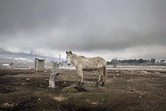 Araucania Region, Chile: Araucania 24