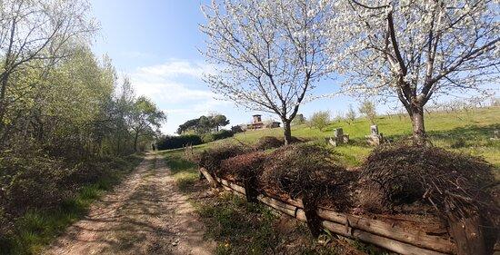 Cressa Sant'antonino - Tra Sentieri e Vigneti
