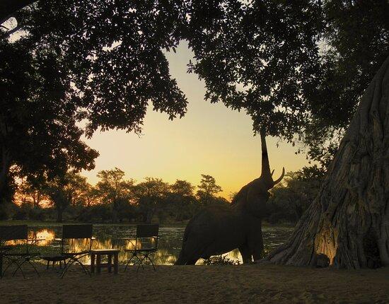 Mana Pools National Park, Zimbabwe: Elephant at Ingwe Pan Camp