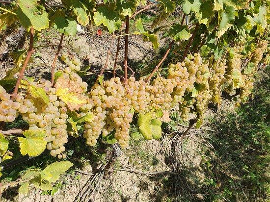 Badan Vins