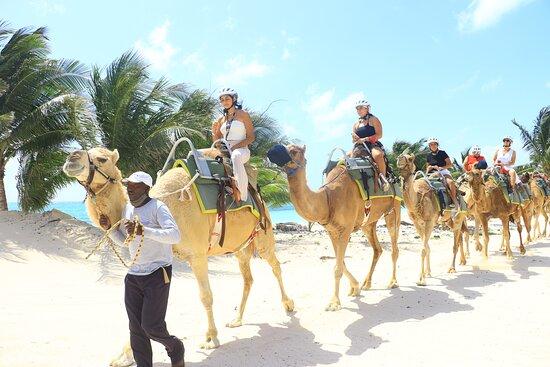 Camel Ride Tour from Cancun and Riviera Maya: El recorrido se lleva a cabo en un entorno inmejorable, con el vista a la selva y al mar