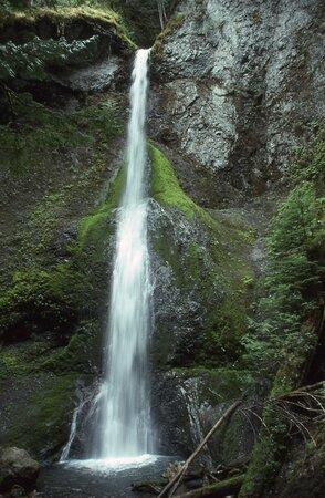 Memories of Hoh Rain Forest