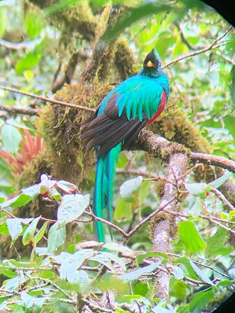 Quetzal King and amazing guide!!!