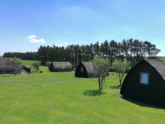 Horsley, UK: View of some of the wigwams.