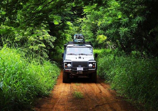 Exploring lush green jungles during Surf Safari