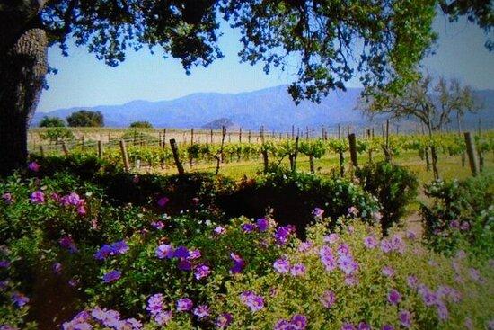 Visite privée des vins de 6 heures et plus dans le comté de Santa...