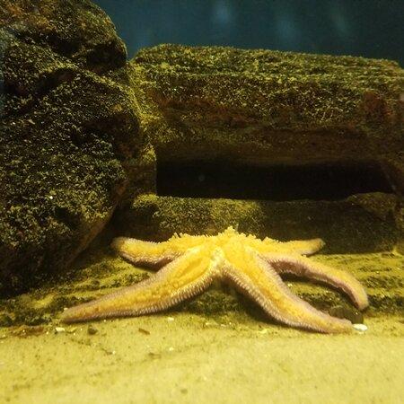 Meeresbiologische Station Laboe
