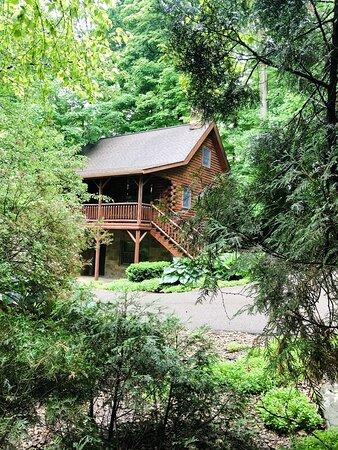 Cedar Log Cabin in the Woods