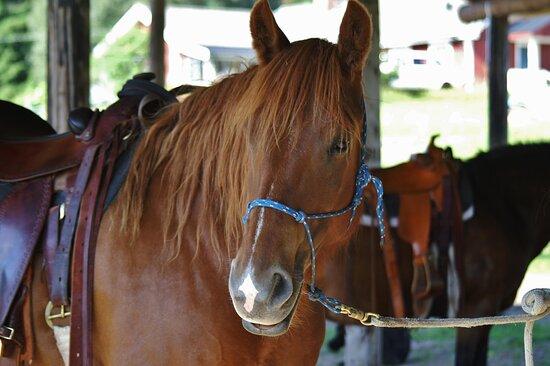 Fjallstallet Horsemanship