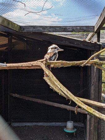 Sawtry, UK: Kookaburra