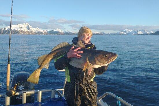 Arctic Spearfishing & guided fishing