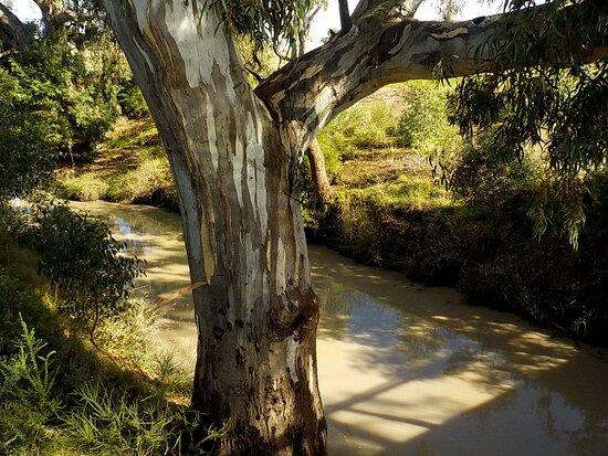 Gretel Grove Reserve