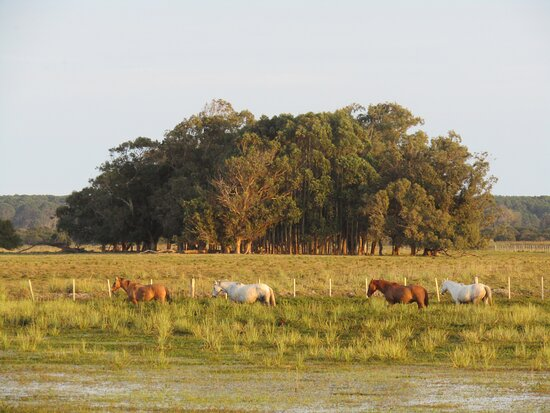 Valizas, Uruguay: Los caballos