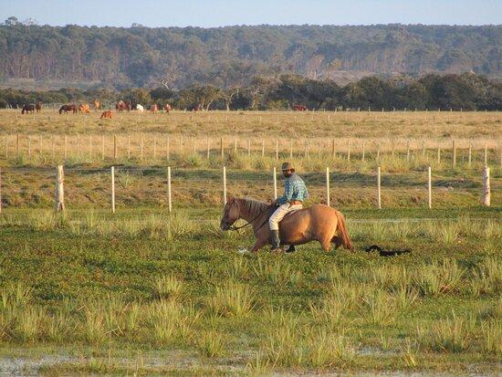 Valizas, Uruguay: Mauro buscando los caballos