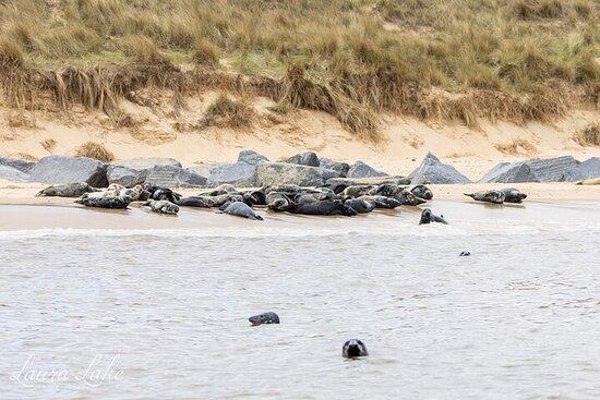 Horsey Beach Seal Watching