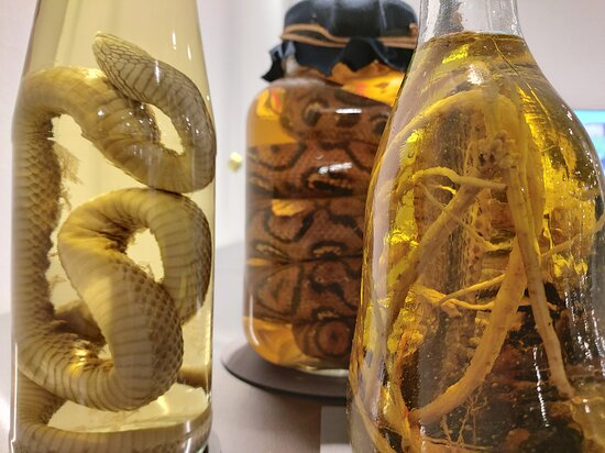 Disgusting Food Museum Berlin