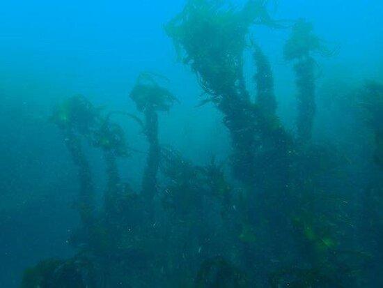 Koréjou Plongée