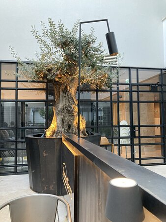 Beautiful olive tree in the terrace