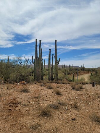 New River, AZ: Taken during the guided UTV tour around the desert in Arizona. The course was both fun and informative as the tour guide provides great and interesting information about the desert.