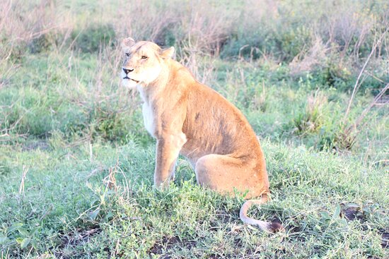 4-Day Private Tour Visiting Serengeti and Ngorongoro Wildlife and Culture tour 이미지