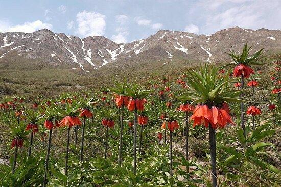 Golestan Province, Iran: Golestan 2