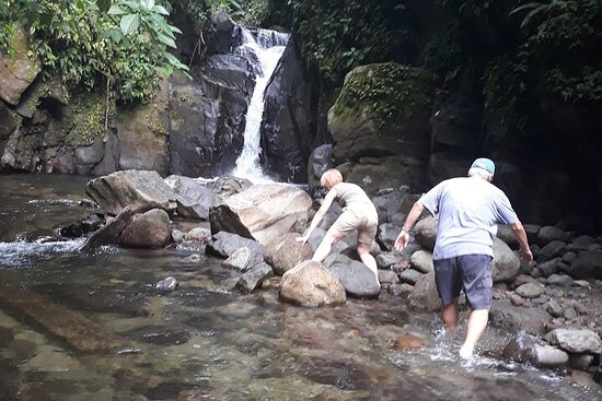 Half-Day Nature and Panorama Tour in Martinique
