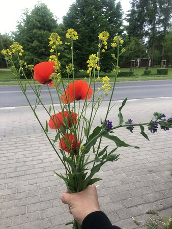 Poland, ME: Refreshing