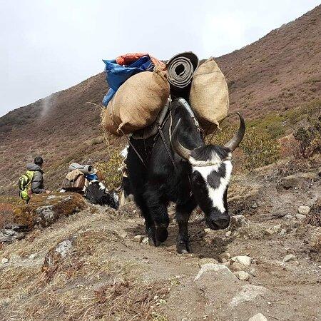 Adventure Lover's Sikkim