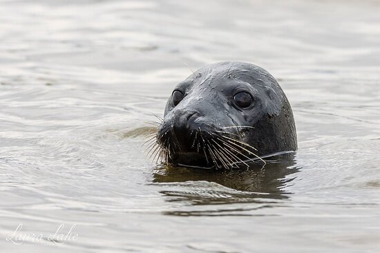 Scroby Sands Seal Watching
