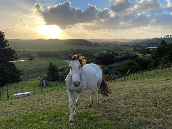 Waimauku, New Zealand: Rusty our lovely Appaloosa