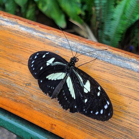 Mindo Cloud Forest - Full Day: Santuary of butterflyies