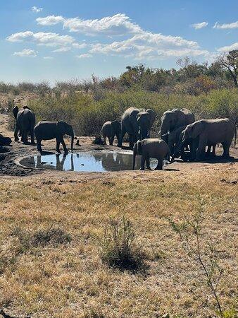 Zeerust, דרום אפריקה: Elephants by watering hole.