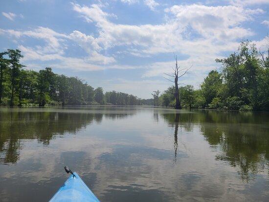 Belknap, IL: Cache River