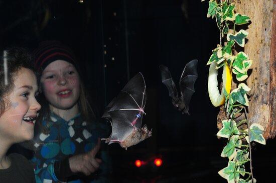 Noctalis - Welt der Fledermause