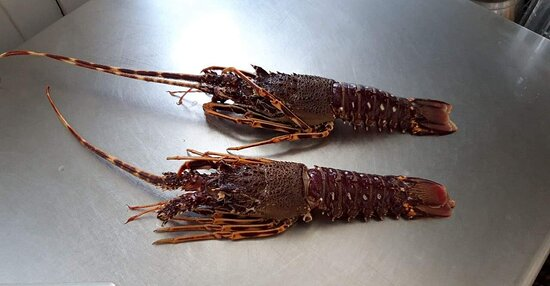 Alive lobsters