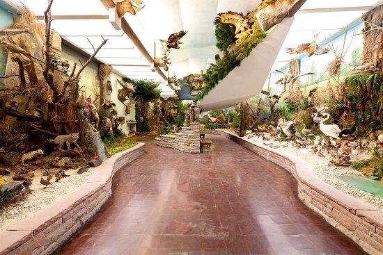 Murrhardt, Allemagne: Naturkundliche Sammlung mit großen, offenen Dioramen -Schaugruppen, einzigartig in Baden-Württemberg.