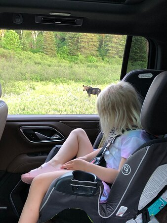 4 year old watching moose.