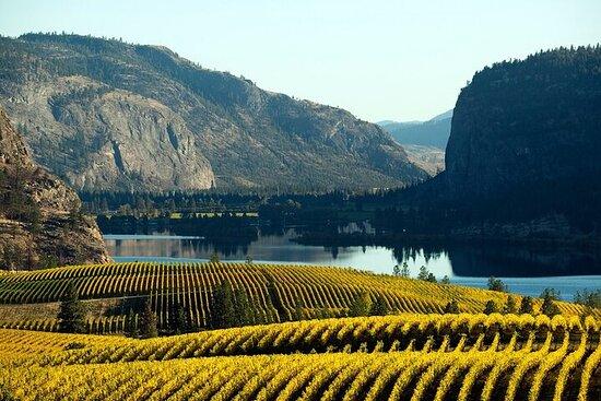 Okanagan Falls Wine Experience from Vernon - 4 Wineries