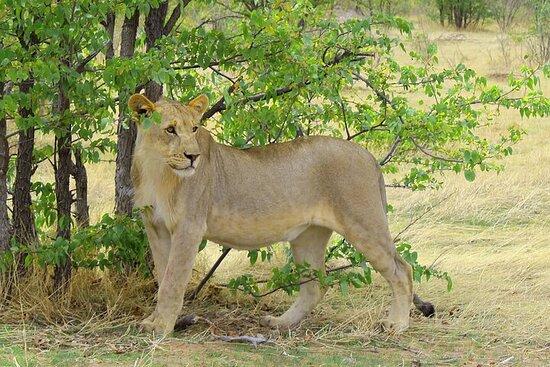 3 Days Etosha National Park Private Camping Tour