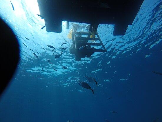 Florida Dive Company