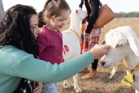 Tarrawingee, Úc: Stella getting a pat