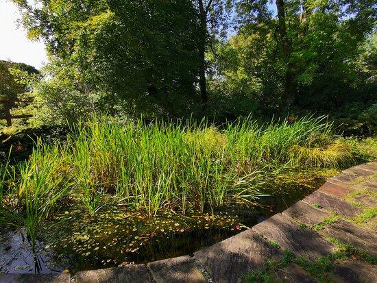 Colintraive Community Garden