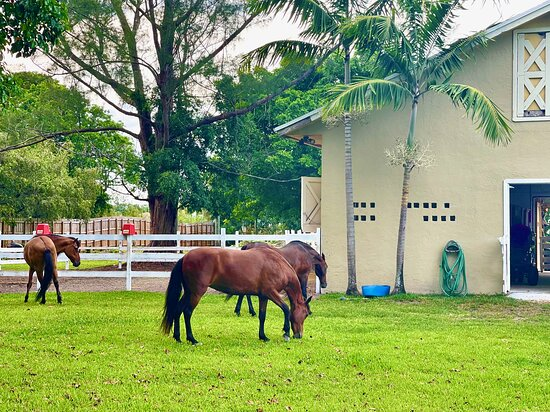Horses Farms