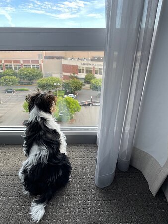 Modern and clean pet friendly hotel!