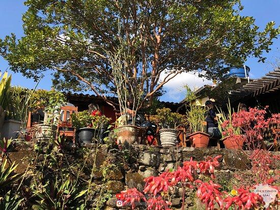 Ritapolis, MG: Área externa. Jardim.