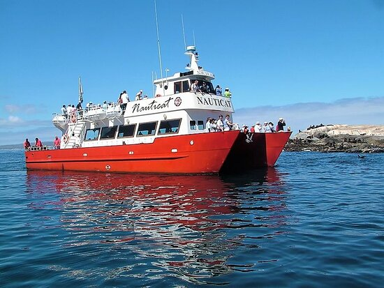 Hout Bay, Sudáfrica: Nauticat at Seal Island