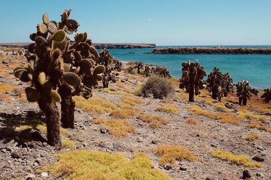 Ilhas Galápagos, Equador: Loved the color!