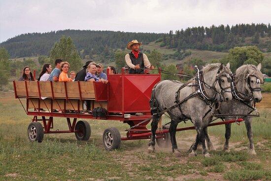 Buckaroos Horse-Drawn Rides
